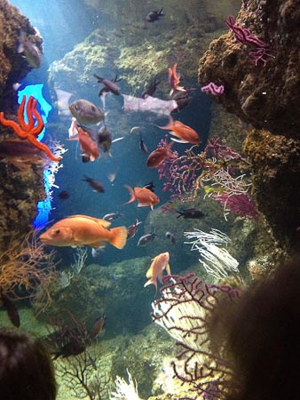 Aquarium van La Rochelle