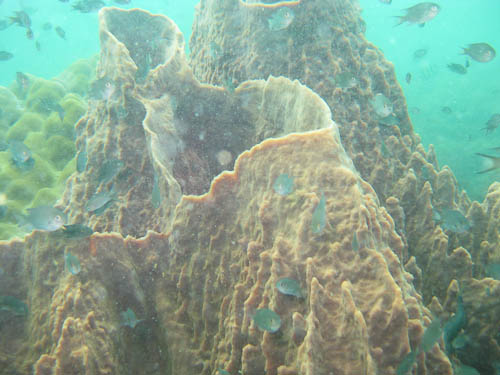 Mooie koraalvormen