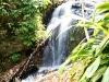 In het regenwoud een waterval en het pad ernaar toe vol met Malay die gingen eten