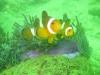 Nemo, die zaten er genoeg