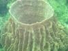 En nog meer koraal