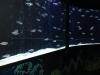 Vissen in een soort zwemmolen