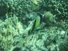 Super snorkelen