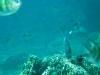 Snorkelen bij Menjangan