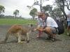 Kangaroes voeren